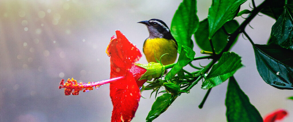 Aves Migratorias Yucatán