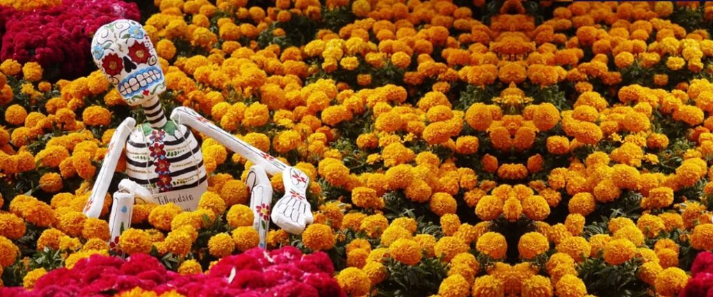 Cempasúchil, flor del día de muertos