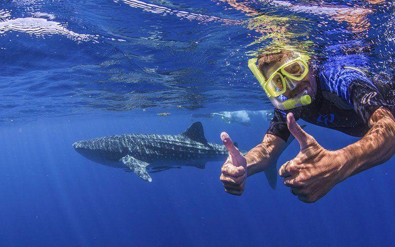 tiburon-ballena-2