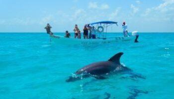 Sian-Kaan-Delfines
