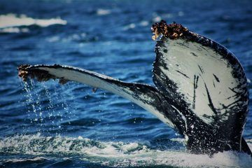 ballena-360x240